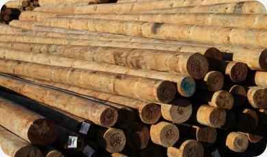 SED Timber Poles